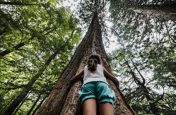 Tree hugging Girl embracing tree trunk of big sequoia tree hugging stock pictures, royalty-free photos & images