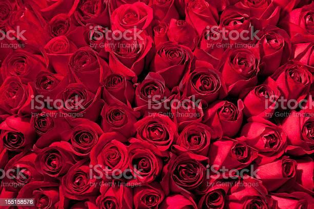 Tree hundred roses picture id155158576?b=1&k=6&m=155158576&s=612x612&h=z5w g8f2nvpd95up6191ptgftzbcuo2coa1brta81fk=