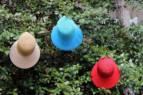 tree hung with 3 colorful spring hats - pam schodt stock photos and pictures