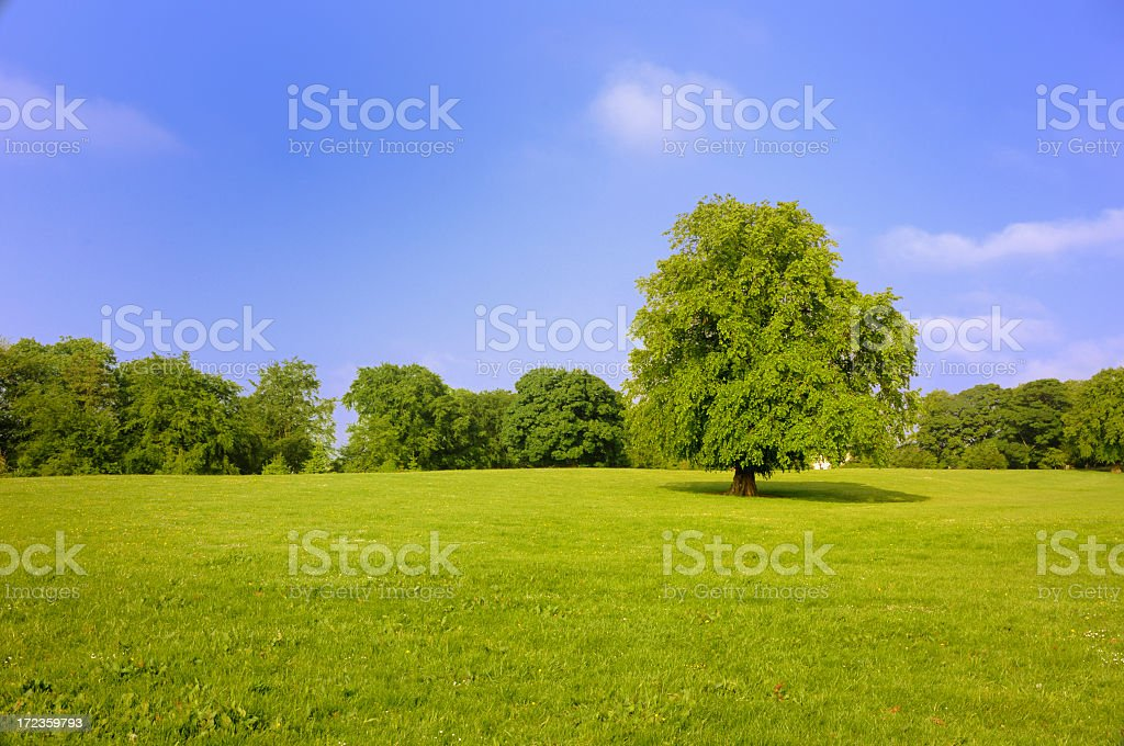 tree in a field on  bright sunny day with royalty-free stock photo