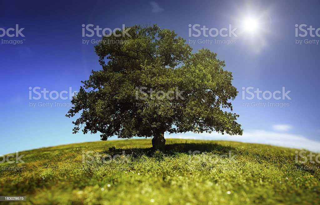 Tree in a green field royalty-free stock photo