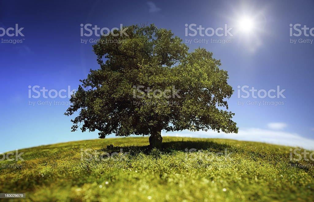 Baum im grünen Bereich – Foto