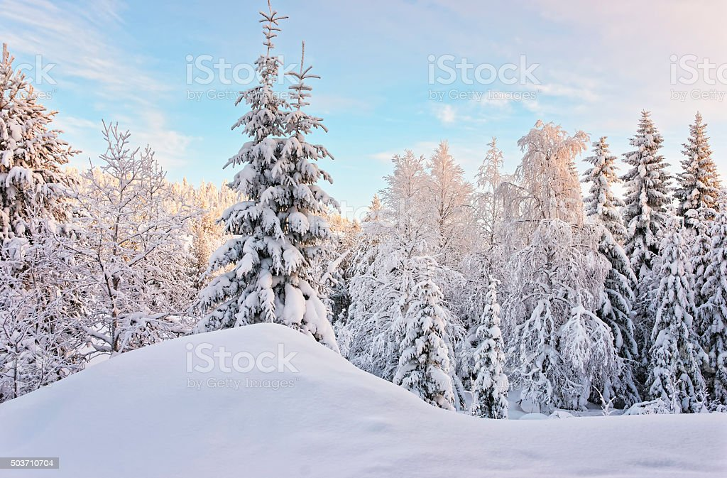 Tree in a hill above the snow covered forest stock photo