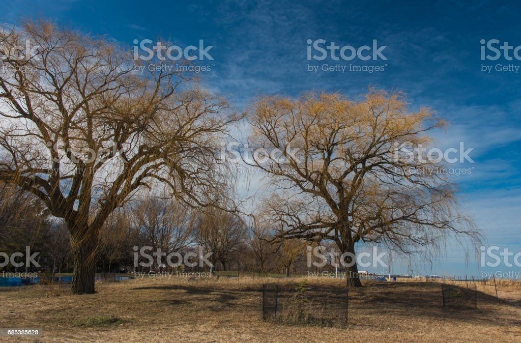Tree in a park royalty-free stock photo