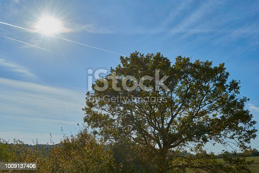 519188550istockphoto A tree in a warm autumn 1009137406