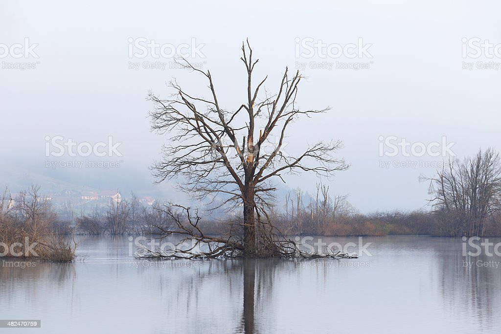 Tree in a wetland royalty-free stock photo