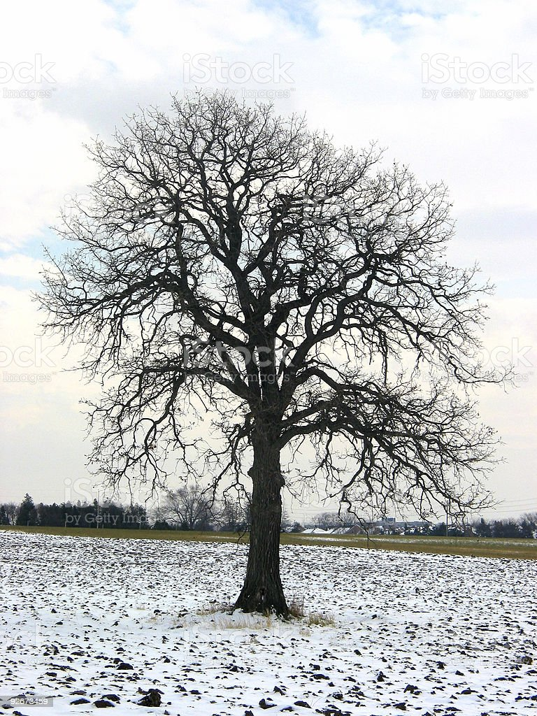 Tree in a winter field royalty-free stock photo