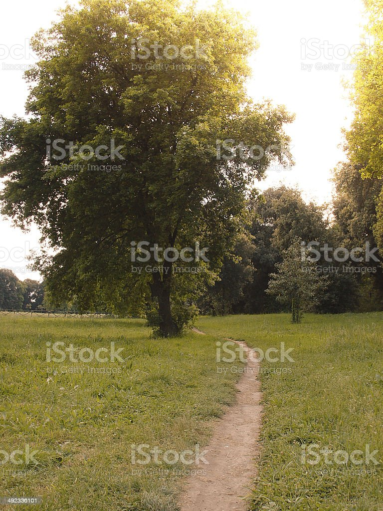 Tree in a Wood royalty-free stock photo