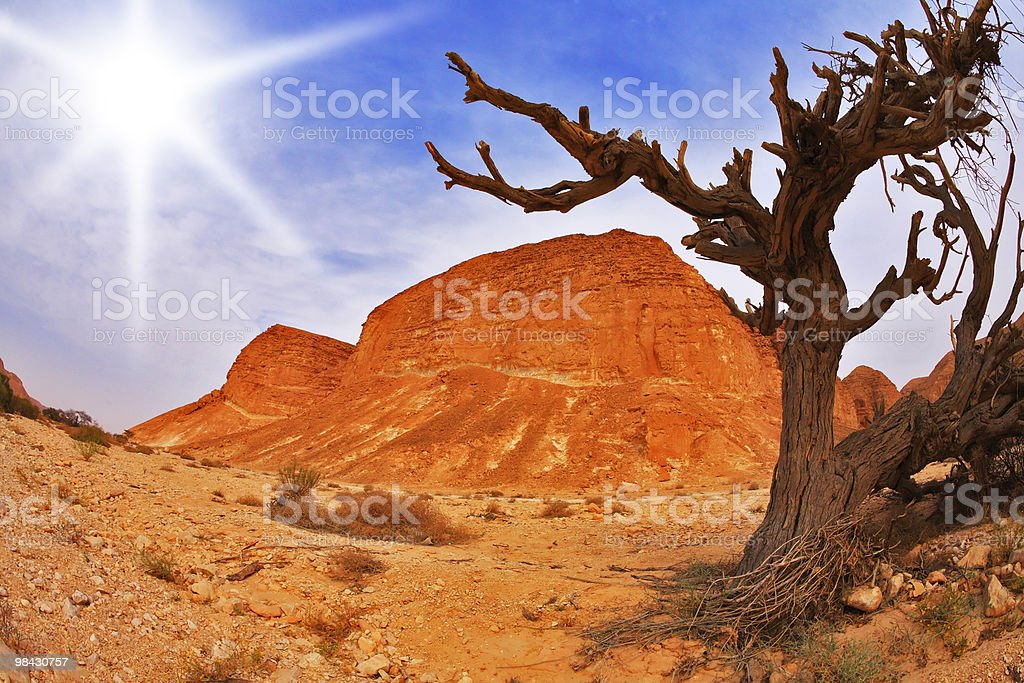 Tree in ancient mountains royalty-free stock photo