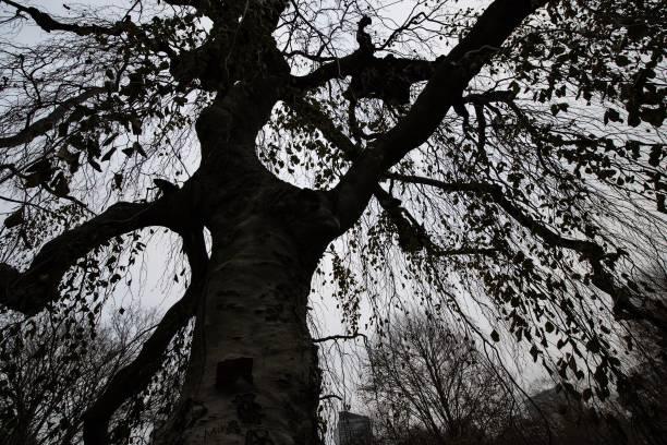 DSC0940D850 Tree in autumn stock photo
