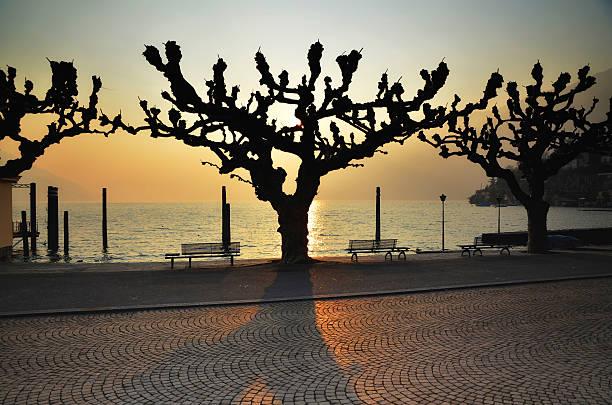 Tree in backlit stock photo