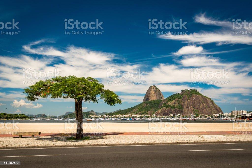 Tree in Botafogo Beach, Rio de Janeiro stock photo
