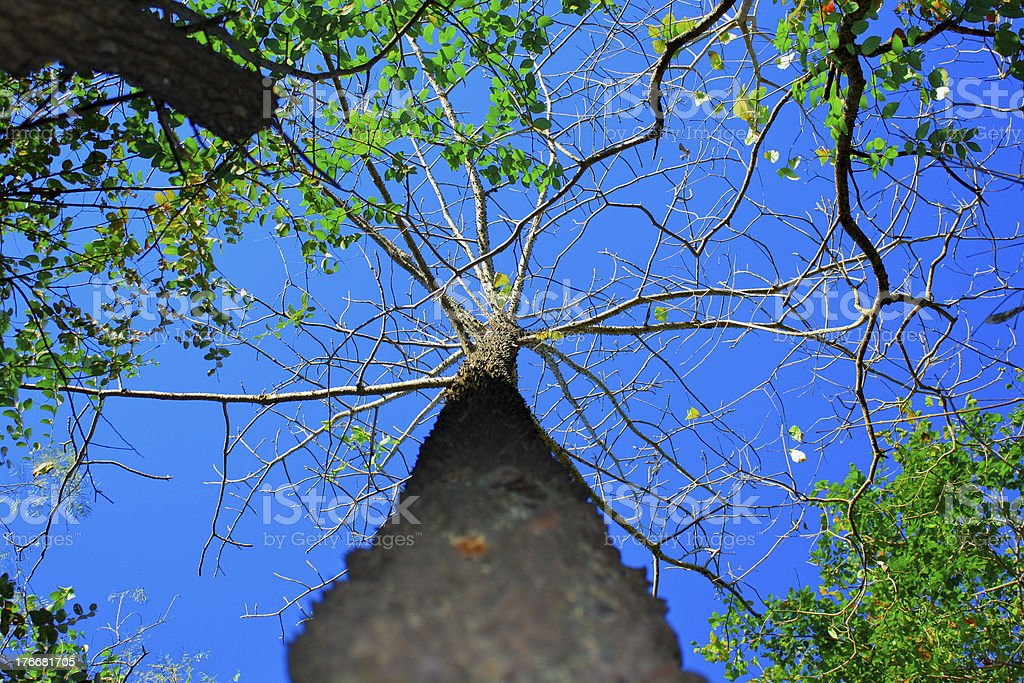 Tree in deep forest with clear blue sky royalty-free stock photo