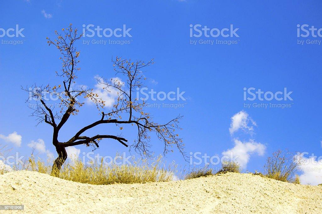 tree in desert royalty-free stock photo