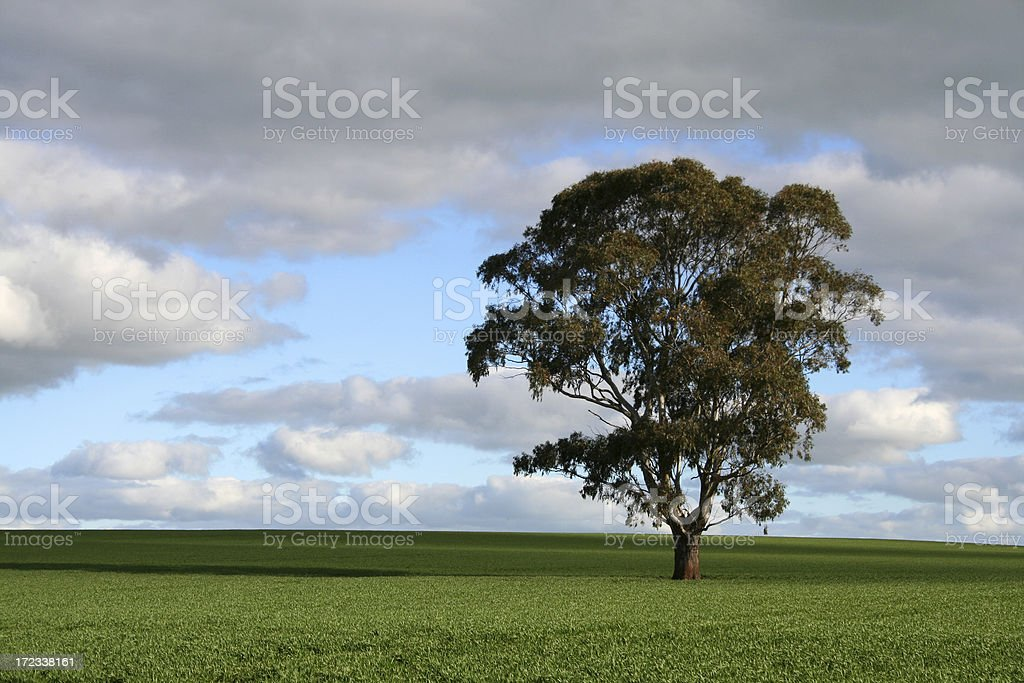 Tree in field royalty-free stock photo