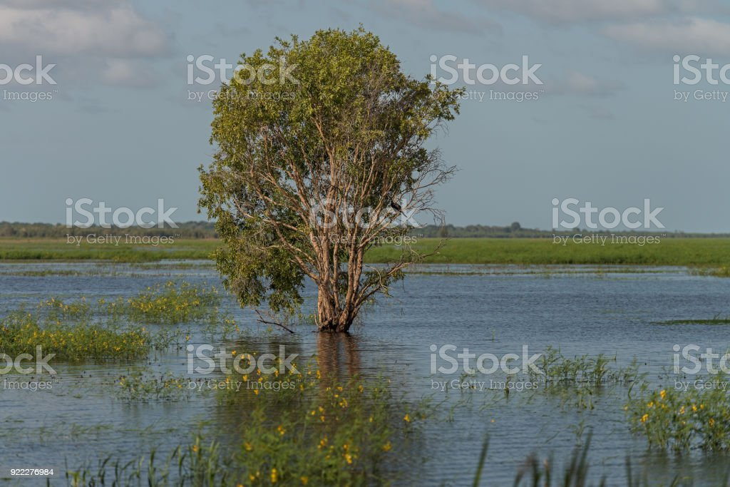 Tree in flood waters at Fogg Dam, NT Australia stock photo