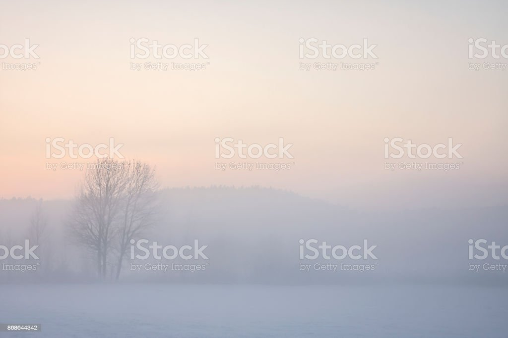 Tree in foggy winter landscape at sunset stock photo
