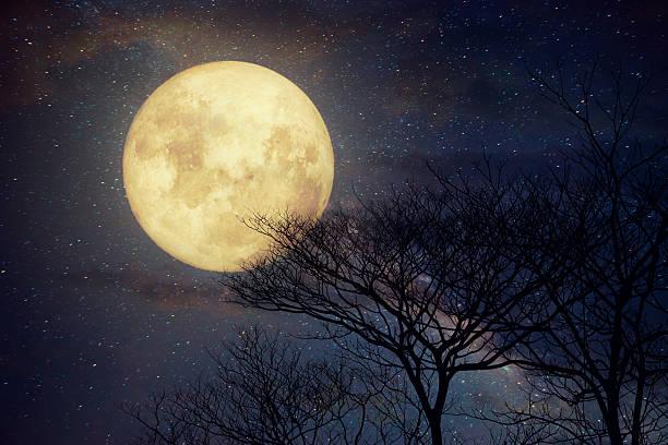 tree in fullmoon - waldmalerei stock-fotos und bilder