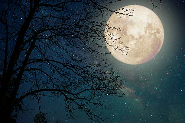 tree in fullmoon stock photo