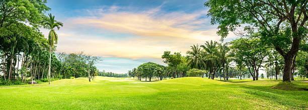 baum in golfplatz - palmengarten stock-fotos und bilder