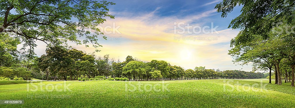 Tree in golf course stock photo