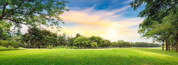 Tree in golf course Tree in golf course on sunset time green golf course stock pictures, royalty-free photos & images