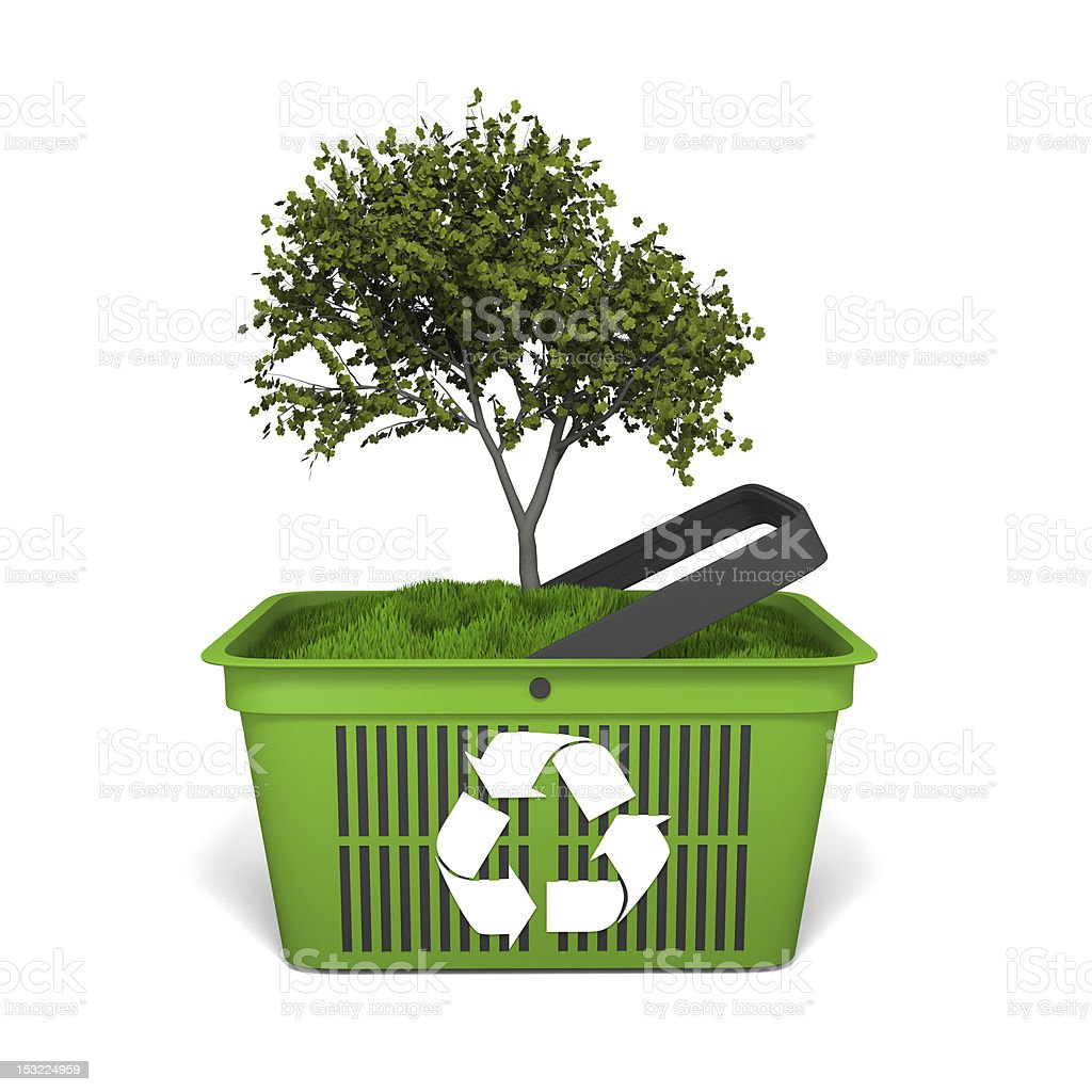 Tree in green basket royalty-free stock photo