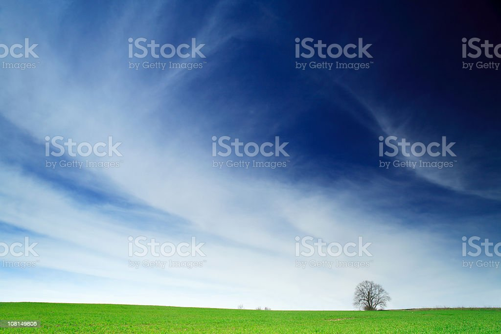 Tree in Green Field Against Beautiful Blue Sky and Clouds royalty-free stock photo