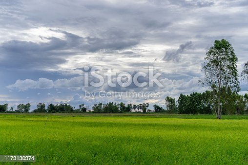 Tree in green field with rainclouds in countryside