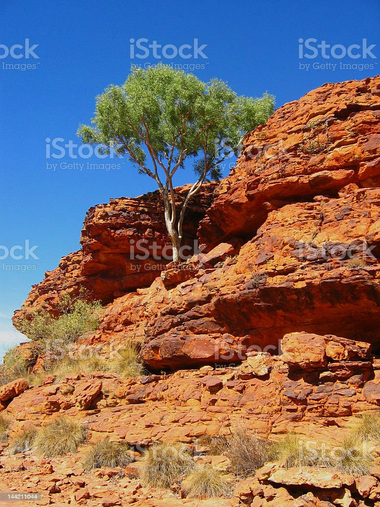 Tree in Kings canyon stock photo
