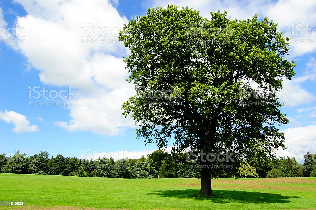 Tree in Mown Meadow stock photo