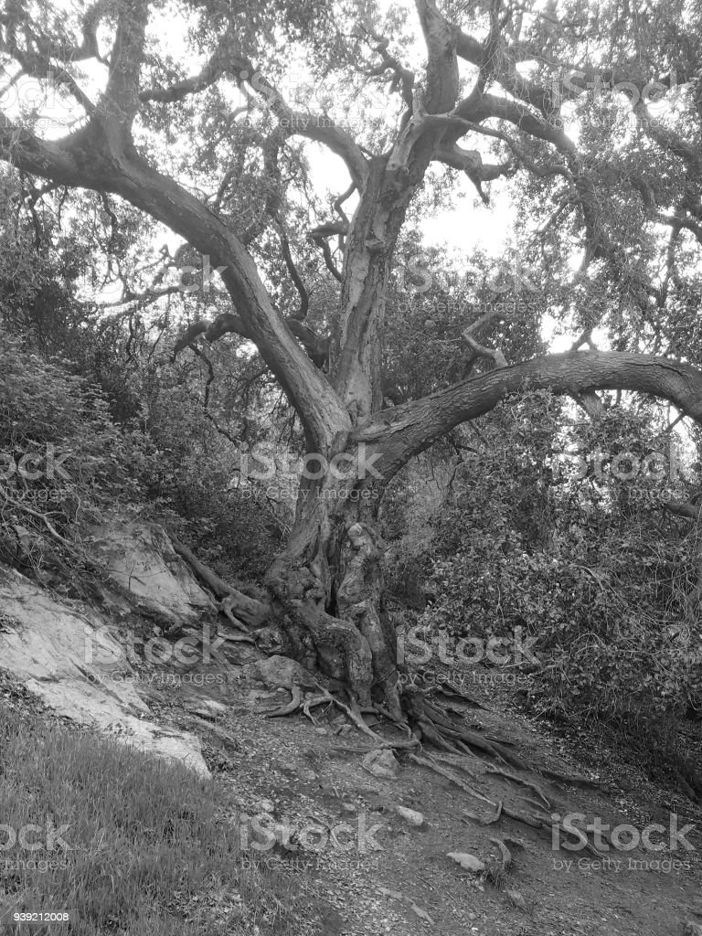 Tree in nature stock photo