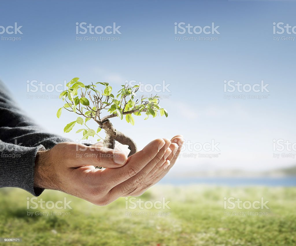 Tree in palm of hand Tree in man's palm Achievement Stock Photo