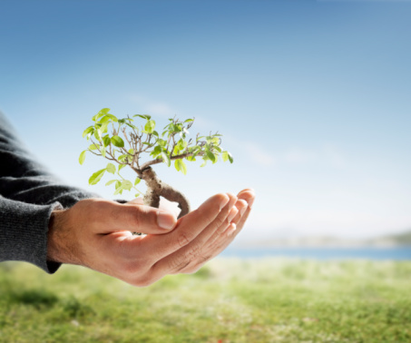 Tree In Palm Of Hand Stock Photo - Download Image Now