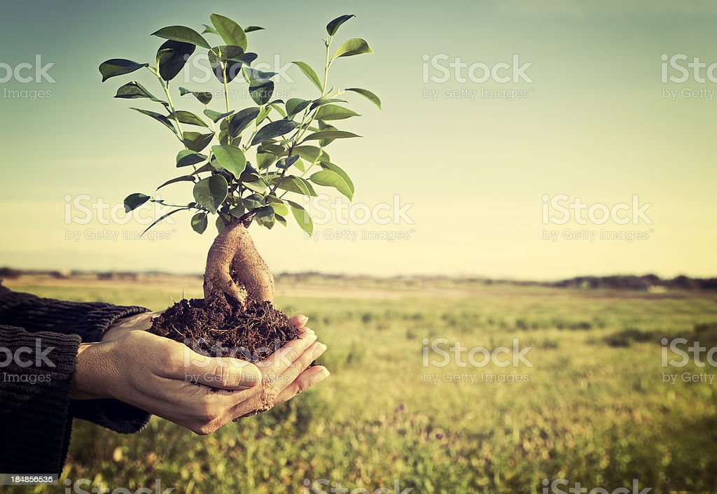 Tree in palm royalty-free stock photo