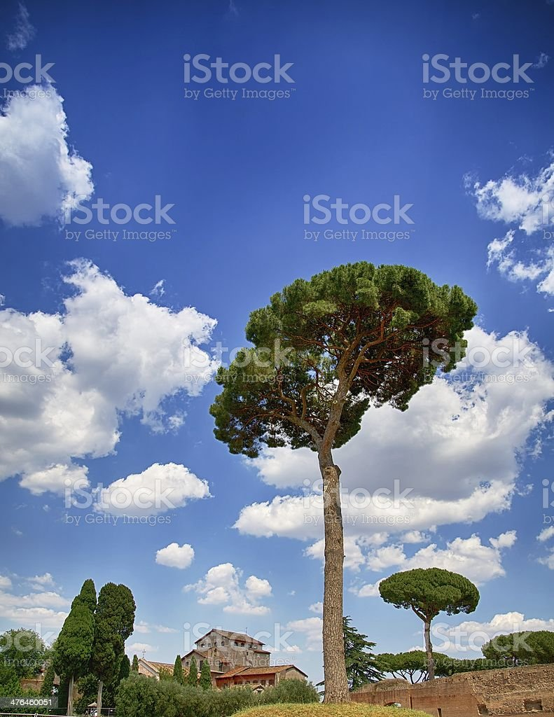 Tree in Rome royalty-free stock photo