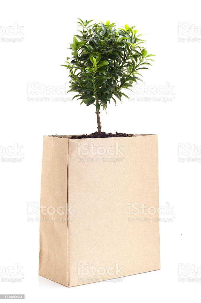 Tree in Shopping Bag stock photo