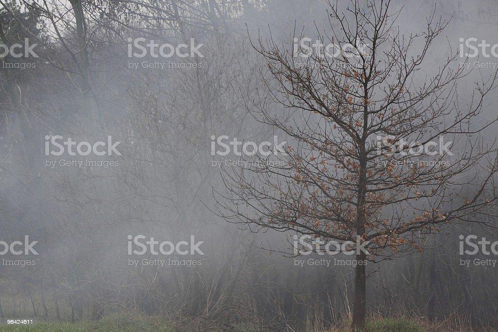 tree in smoke royalty-free stock photo