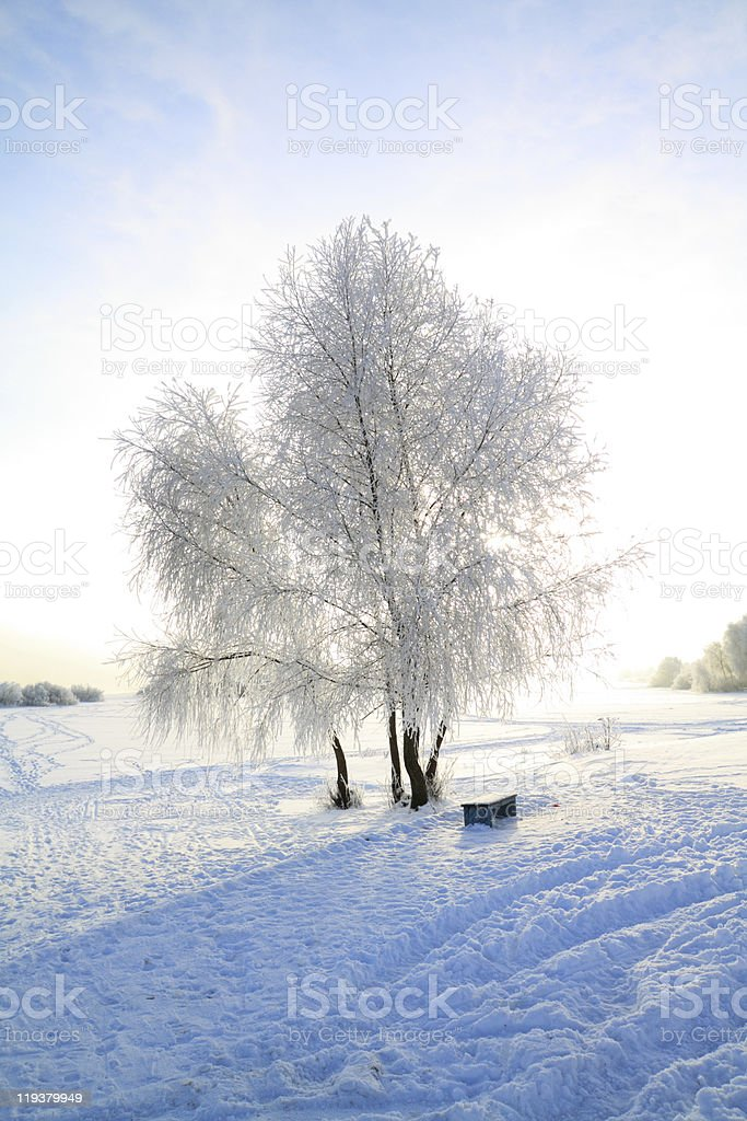 tree in snow royalty-free stock photo