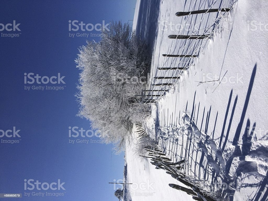 tree in snow royalty-free stock photo