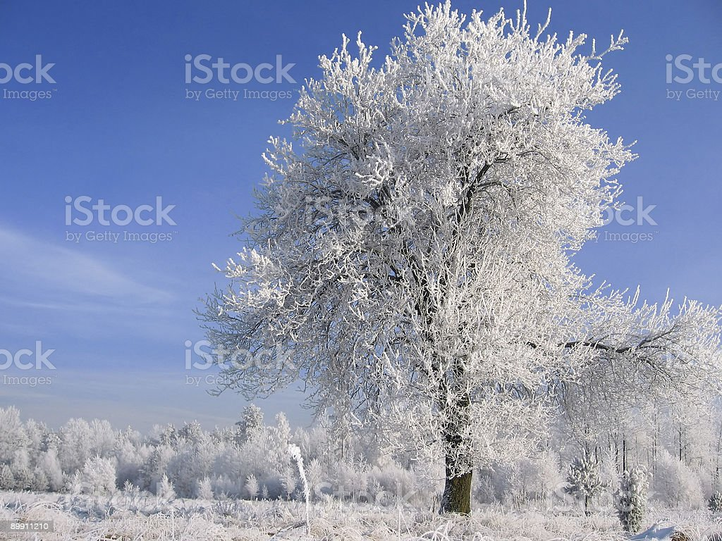 tree in Schnee Lizenzfreies stock-foto
