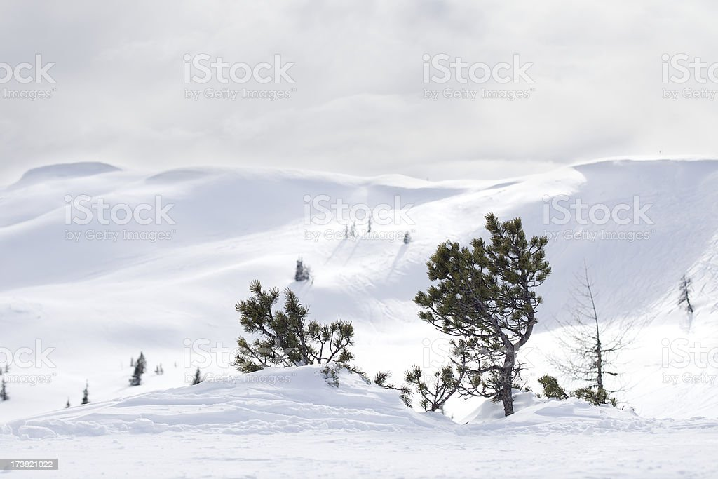 Tree in snowed mountain stock photo