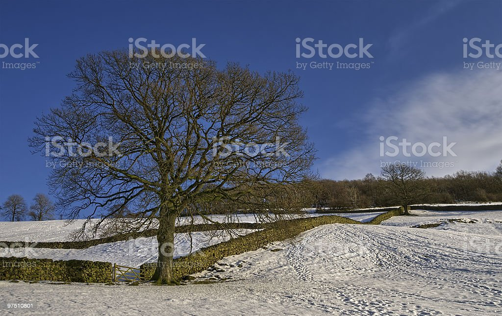 Tree in snowy countryside royalty-free stock photo