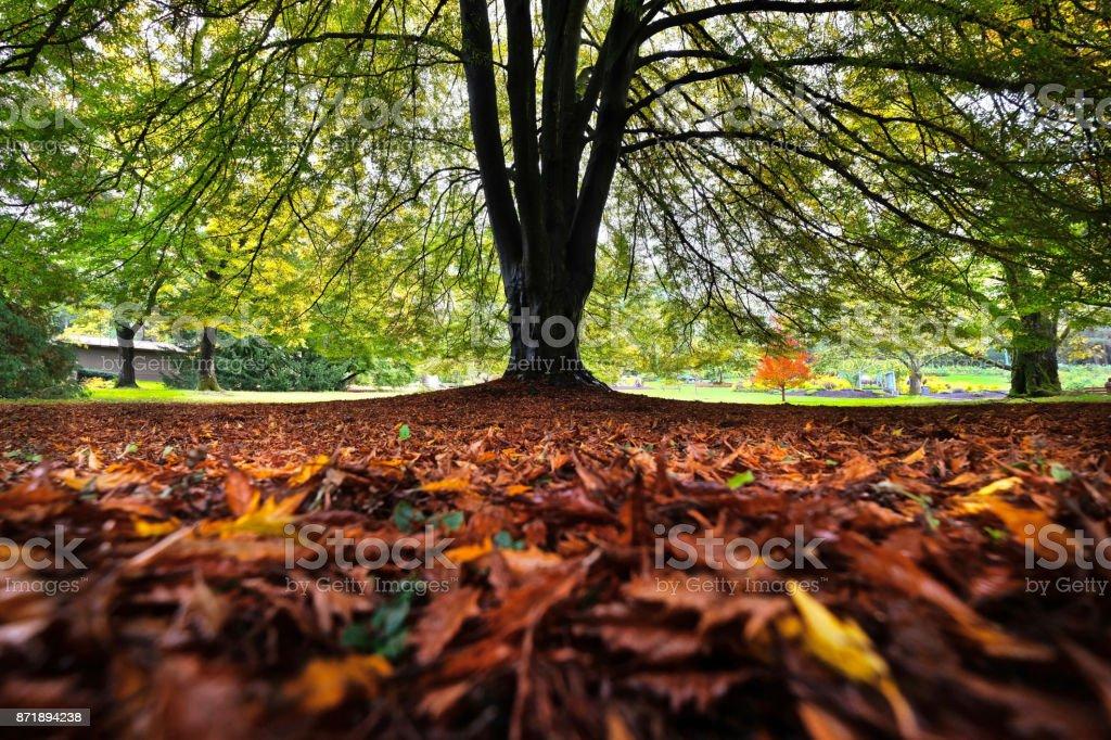 Baum im Stanley Park. Vancouver. Britisch-Kolumbien. Kanada. – Foto