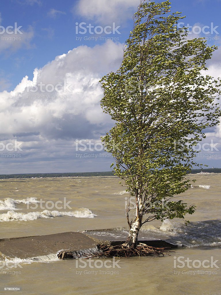 Tree in storm royalty-free stock photo
