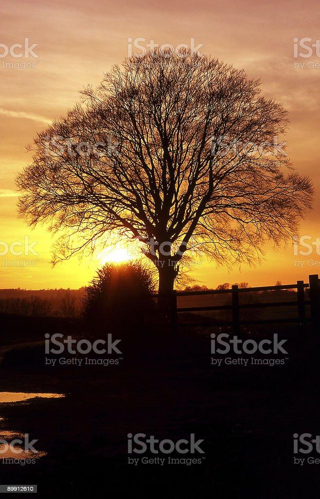 Árbol en puesta de sol foto de stock libre de derechos