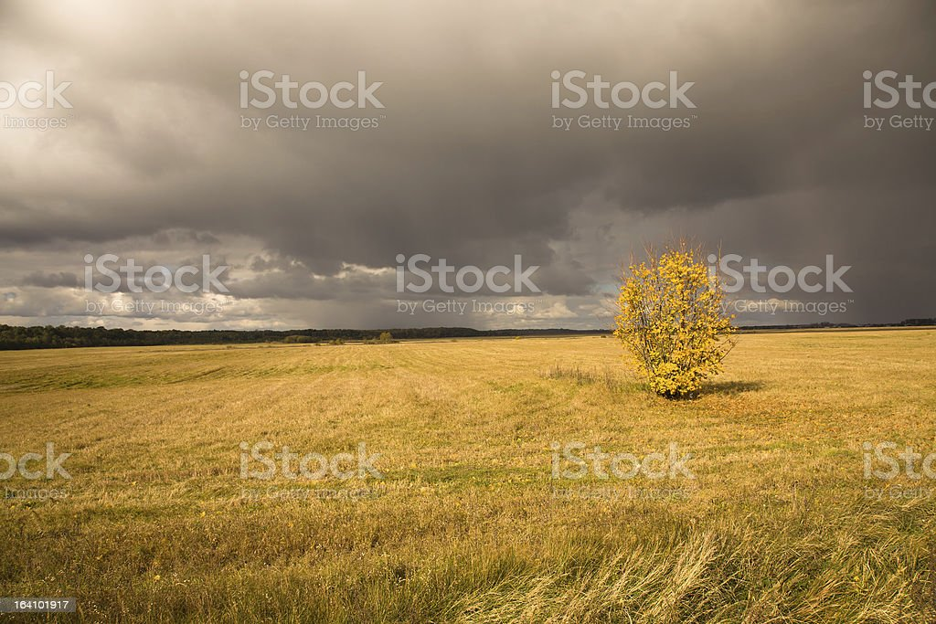 tree in the autumn royalty-free stock photo