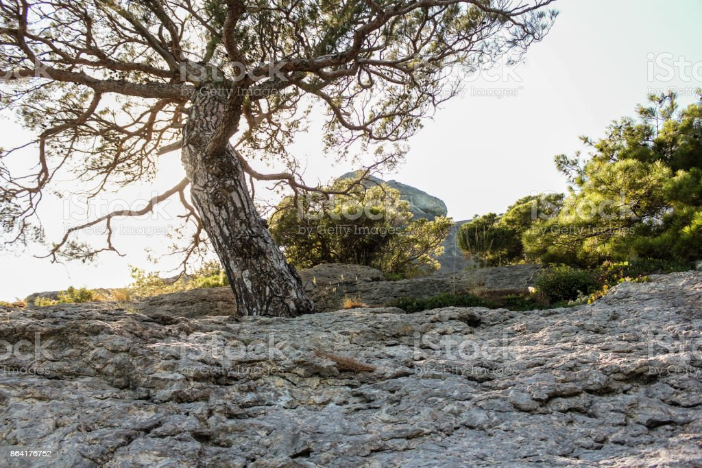 Tree in the backlight of the sun. royalty-free stock photo