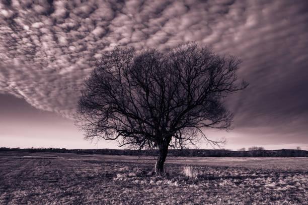 drzewo w chmurze – zdjęcie