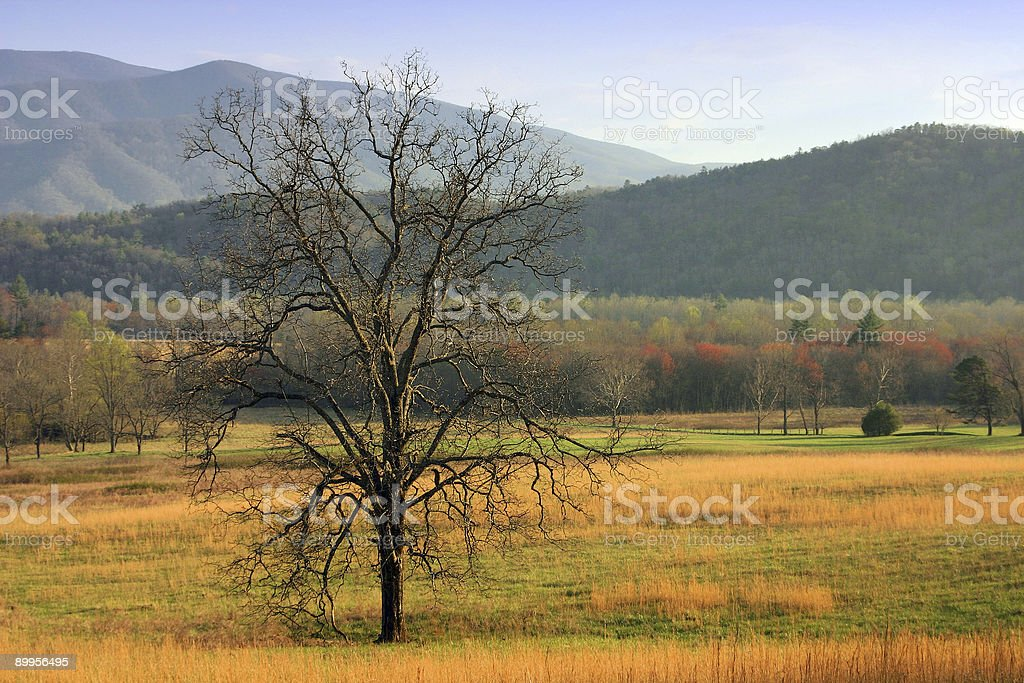 Tree in the cove royalty-free stock photo